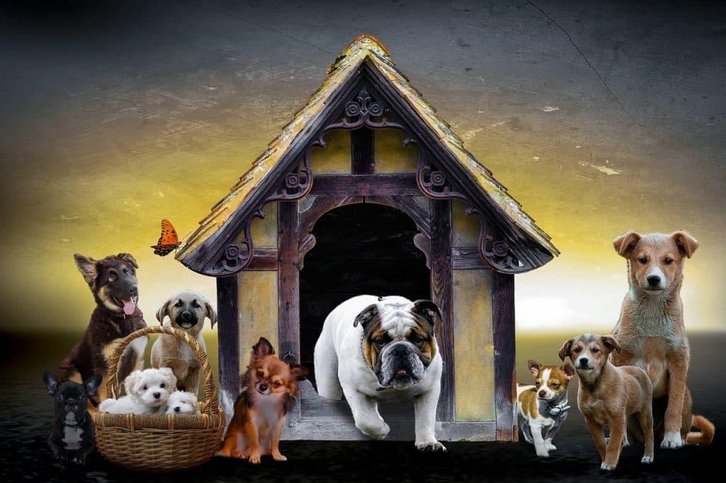Ad ogni cane la sua cuccia