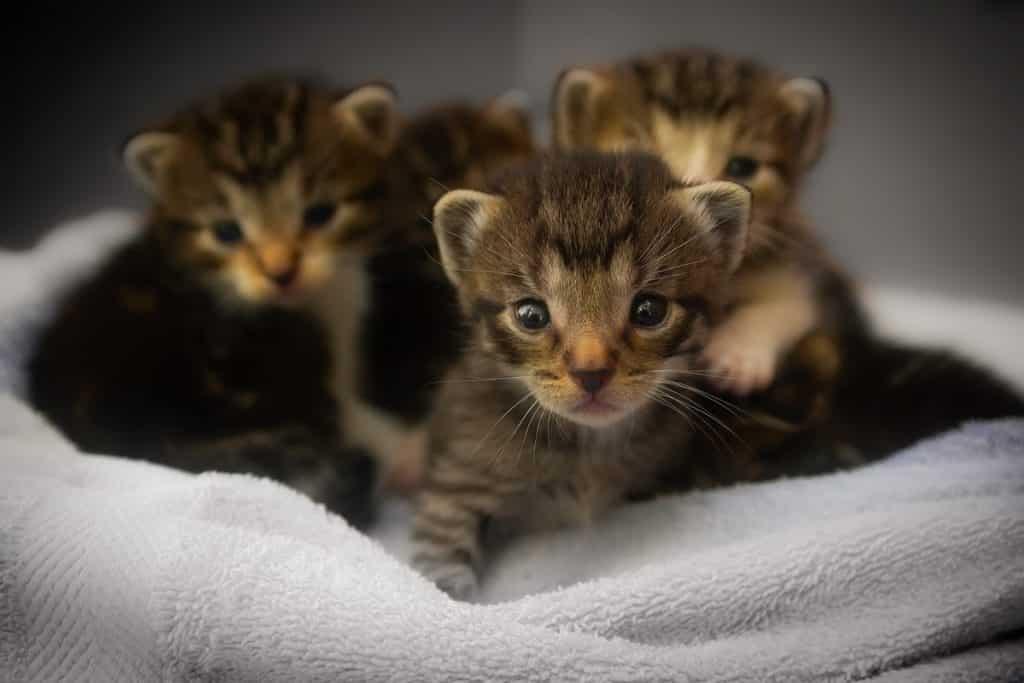 Durata media della vita dei gatti: i fattori che incidono sulla longetivà