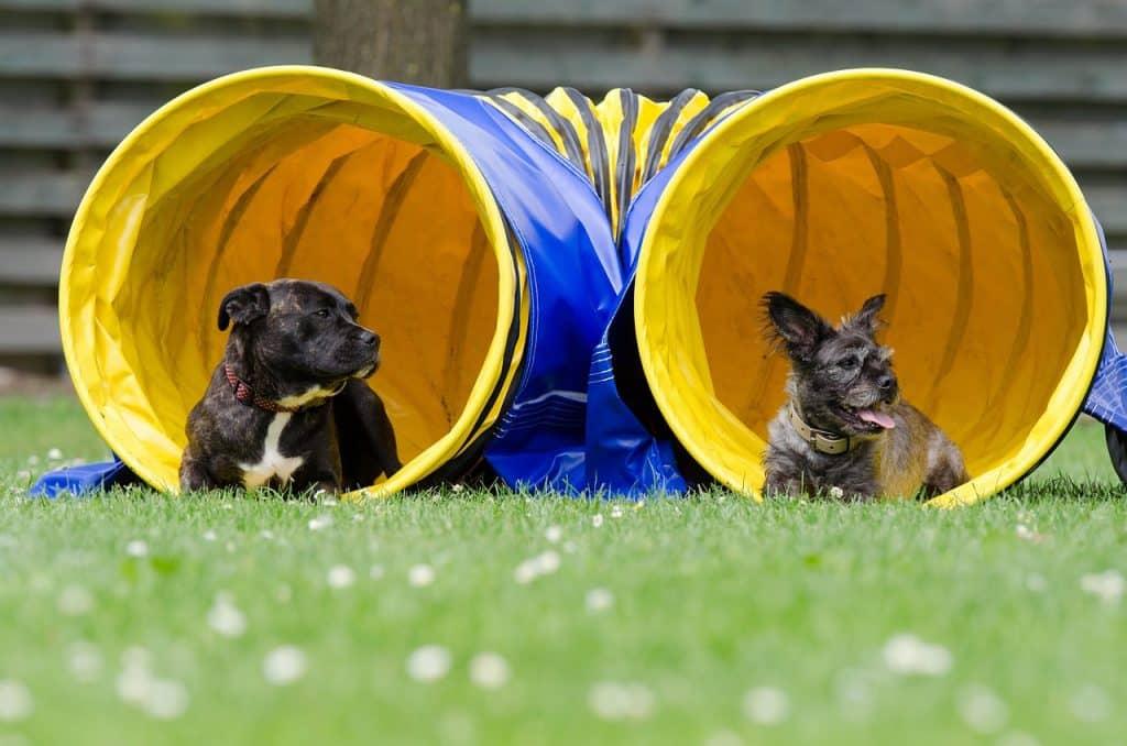 Dog agility: come fare sport con il proprio cane divertendosi